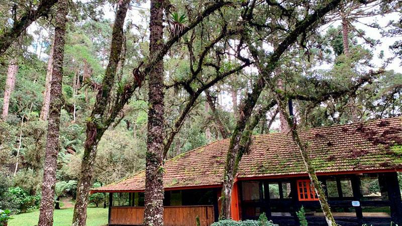 Conheca o Bosque do Silencio em Campos do Jordao 2